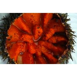 Oursin de Galice